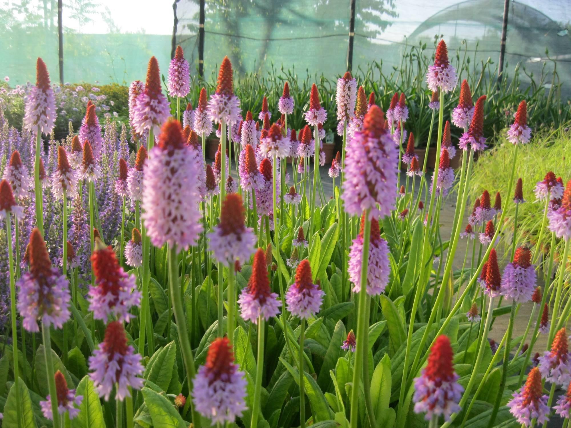 Orchidee Da Esterno.Il Vivaio Vivaio Zanelli